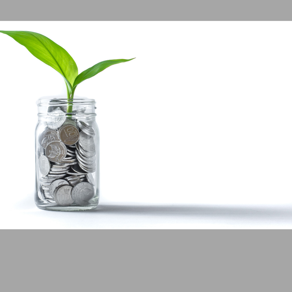 image of a plant in money, featured image for blog post on Mortgage Pre-Approval, Michelle Campbell, Canadian Mortgage Broker